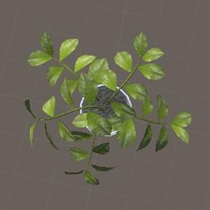 観葉植物(HousePlants)