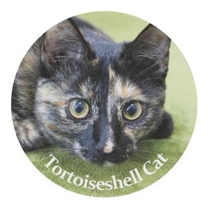 【チャリティ】Tortoiseshell Cat マスキングテープ サビ猫 マスキングテープ