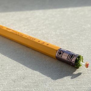 きのこ鉛筆