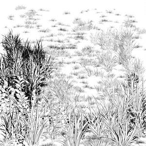草ブラシ6種セット・コミスタクリスタ兼用素材
