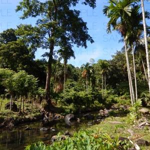 ジャングルと滝:写真素材集