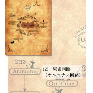 アンティーク風生化学ポスカ(2枚組)