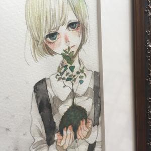 「苔玉少女」原画