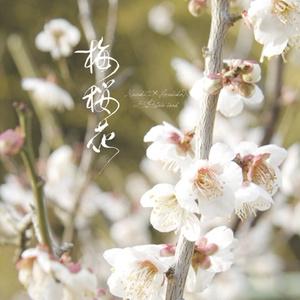 黒春写真集「梅桜花」