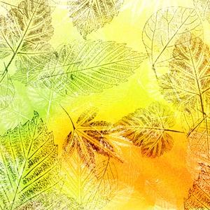 葉っぱの背景素材高解像度