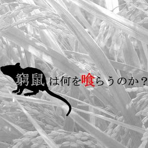 特殊型HO制クトゥルフシナリオ『窮鼠は何を喰らうのか?』