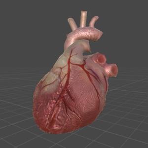 心臓(低ポリゴン、リアル)
