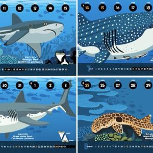 2019サメ図鑑カレンダー