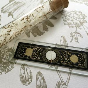 種子とプレパラート マスキングテープ