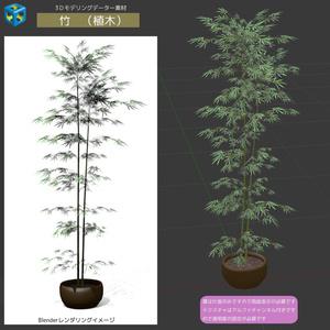 竹 (植木)