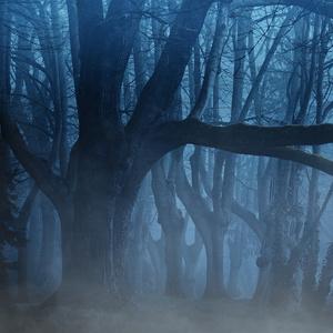 「樹」 〜作品集 2  The Tree -  Petit Piano Pieces by Takeru Hirabayashi