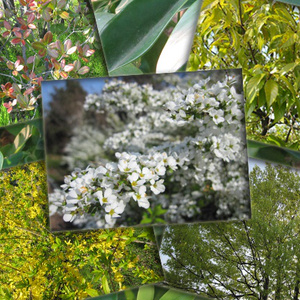 花葉っぱなどその他 写真素材