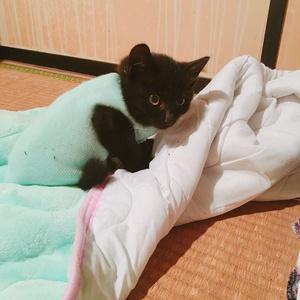 子猫募金写真集