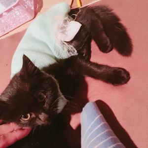 子猫医療費募金第2弾