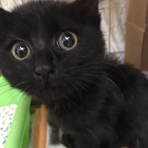 第3弾!子猫医療費募金