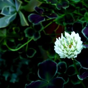 花と焦燥 前編