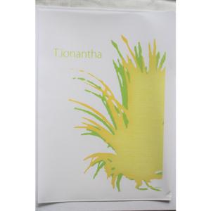 【A4クリアファイル】ティランジア・イオナンタ