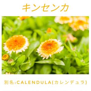 キンセンカ/アクリルブロック ★購入特典付き