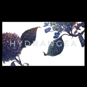 紫陽花と額紫陽花のモバイルバッテリー