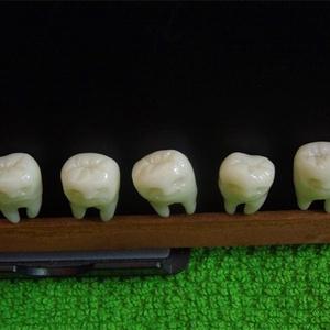 歯のマグネット 歯の磁石 Goohadoオリジナル トゥースフェアリー(歯の妖精)ラッキートゥース lucky tooth