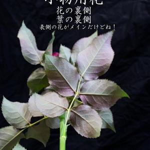 小物用花写真
