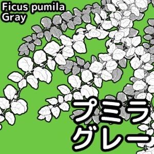 プミラブラシセット グレー/クリスタ