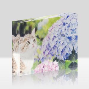 [アクリルブロック] 猫と紫陽花