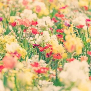 雨の雫が落ちた庭園【透明感/穏やか/切ない/清涼感/胸の高鳴り/ドラマティック/雨上がり】