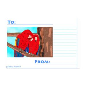 Parrotsポストカード