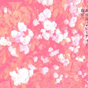 ミルテの花