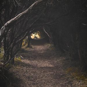 不気味な森に迷い込んだようなBGM