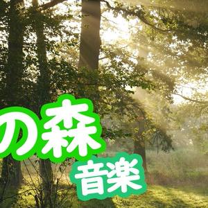 朝、静けさの中で森が徐々に目覚めていくようなBGM