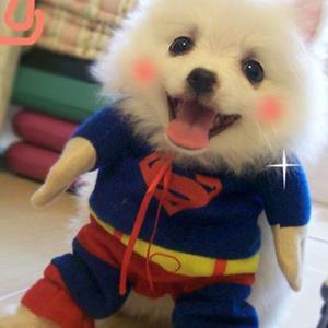 【人気爆発】トイプードル スパイダーマン風変装服 ミニチュア ダックスハロウイン変装服通販 超可愛い 子犬 スーパーヒーロー コスプレ仮装衣装