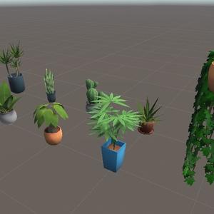 Coquelicotz_Plants
