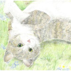 猫たちのエトセトラ