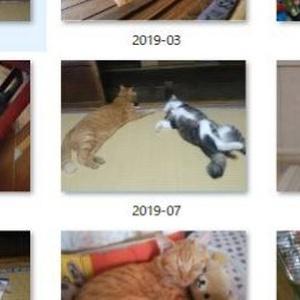 実家猫カレンダー