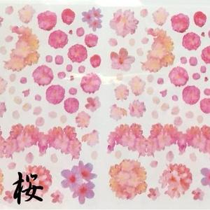 A6 一部B品 ベタ・桜