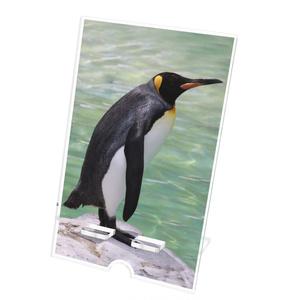 ペンギン アクリルスマホスタンド(ケーブル穴あり)