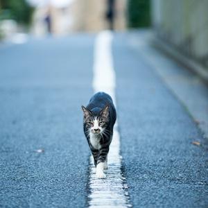 光・一瞬 ねこ写真ポストカード⑤「我が道を行く」