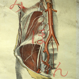 廃醫院解剖図オリジナルカードセット