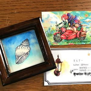 巻貝のイラスト(原画)