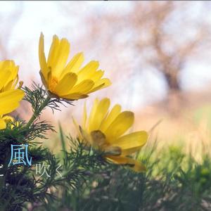 花に風吹く