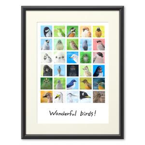 Wonderful birds!