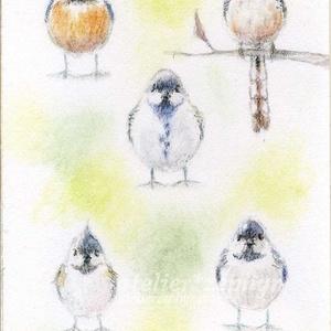 *最新作* ミニ原画 いろいろ鳥集めましたシリーズ