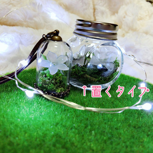トコシエコウ栽培キット置くタイプ