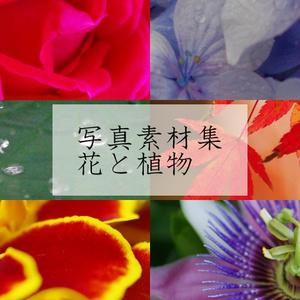 写真素材集 「花と植物」「空と水辺」「和風建物と山」