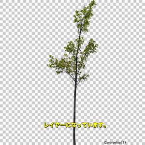木の素材_No,03