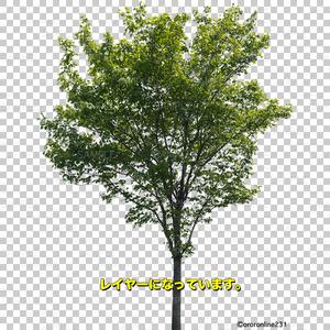木の素材_No,04