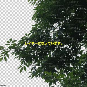 木の素材_No,07