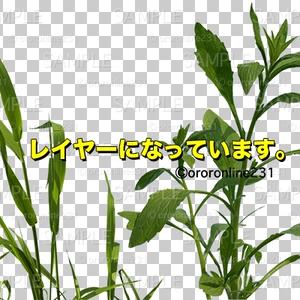草の素材_No,01